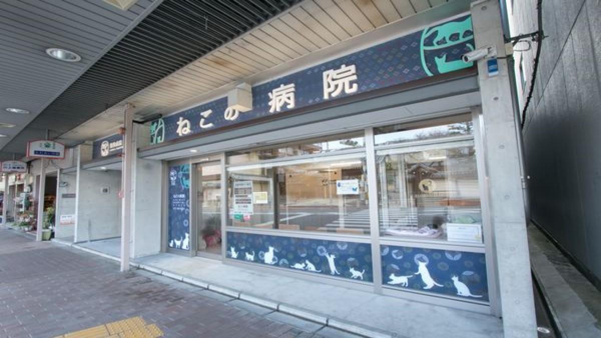 動物病院京都 ねこの病院