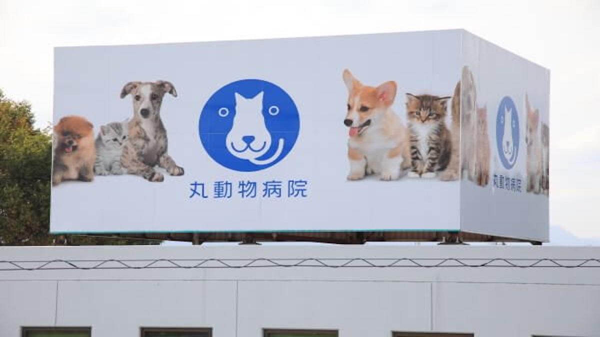 丸動物病院