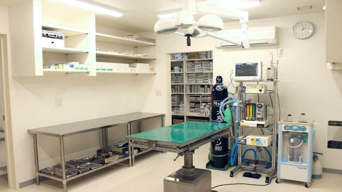 マエカワ動物病院