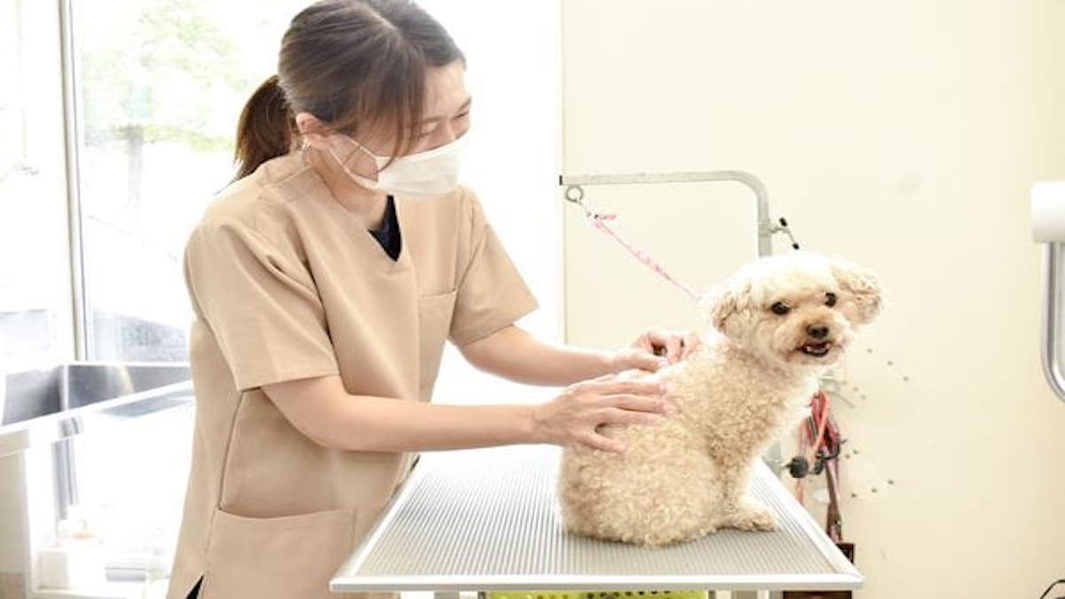 みらい動物病院