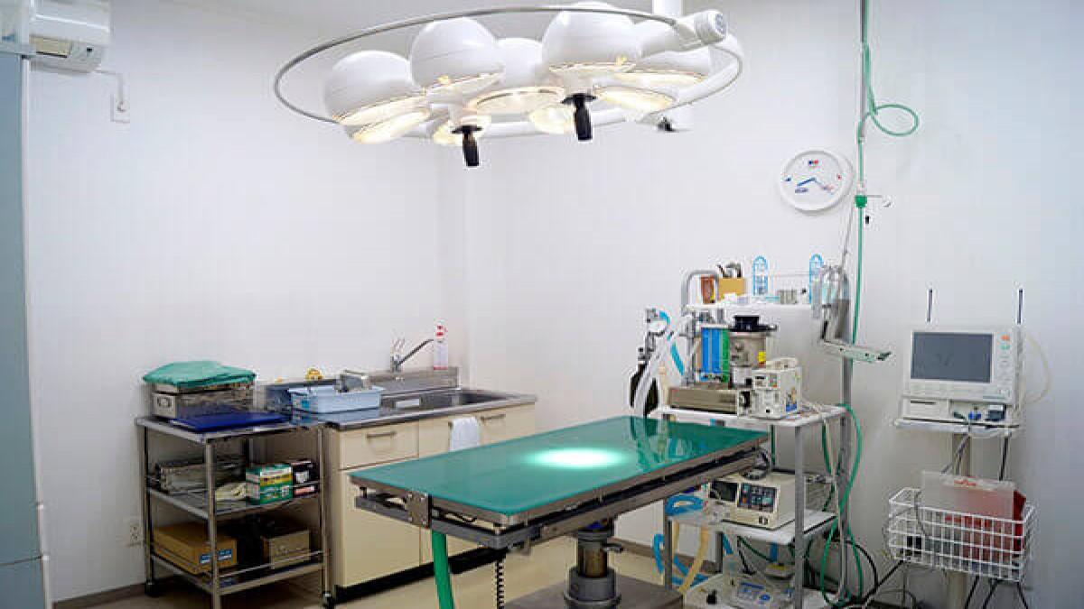 王寺動物病院分院 Ron動物病院