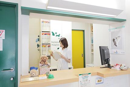 下北沢動物病院施術写真