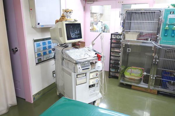 カナヤ犬猫病院