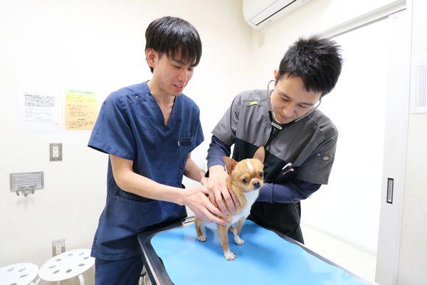 いぐち動物病院