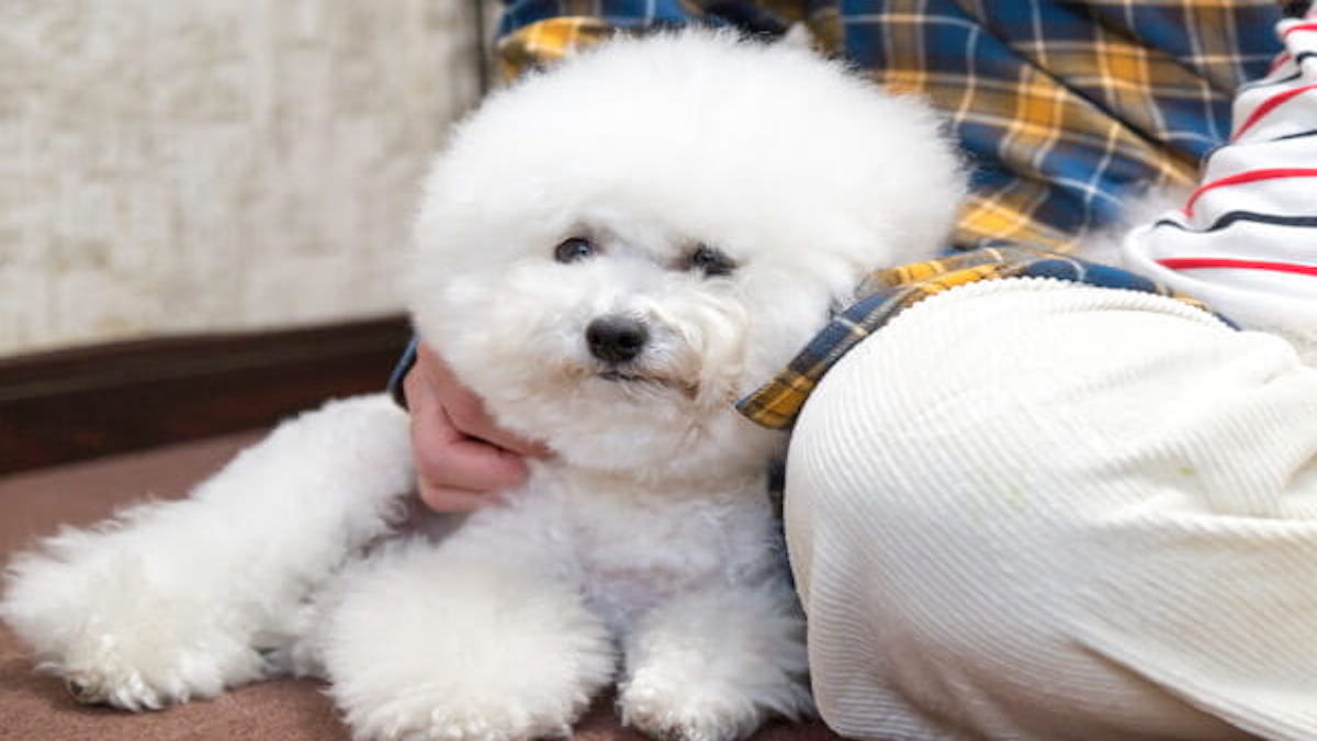 Dogスター 犬の託児所