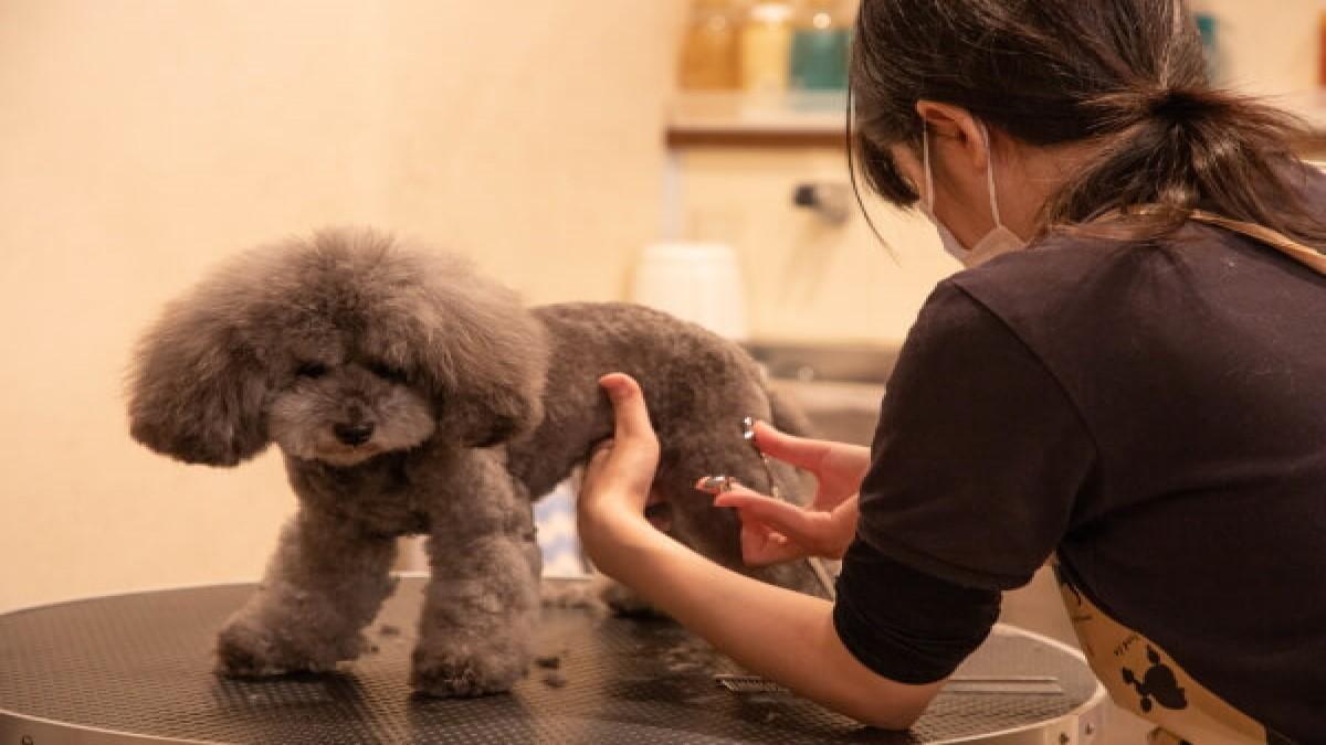 Dog Styling Salon SAMPO(ホテル)