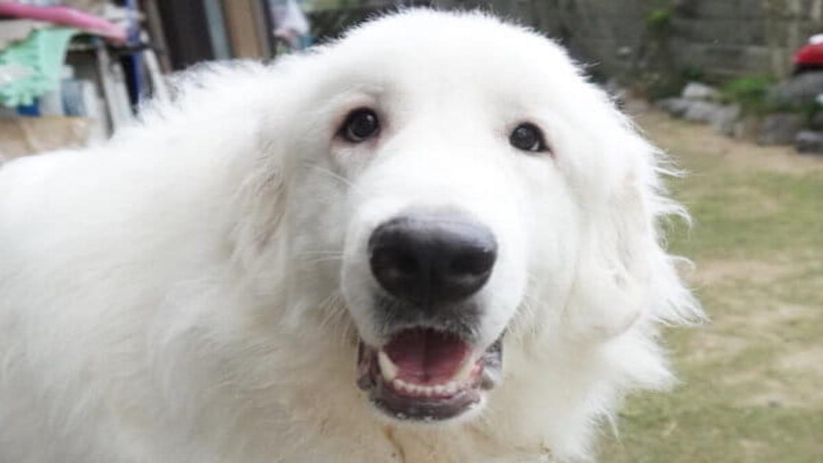 K9 Dog Life Adviser