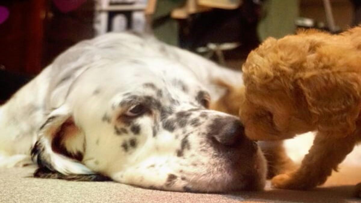 KAPUA ~Dog Salon & Beauty~