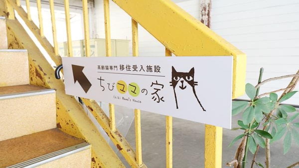 高齢猫専門移住受入施設 ちびママの家