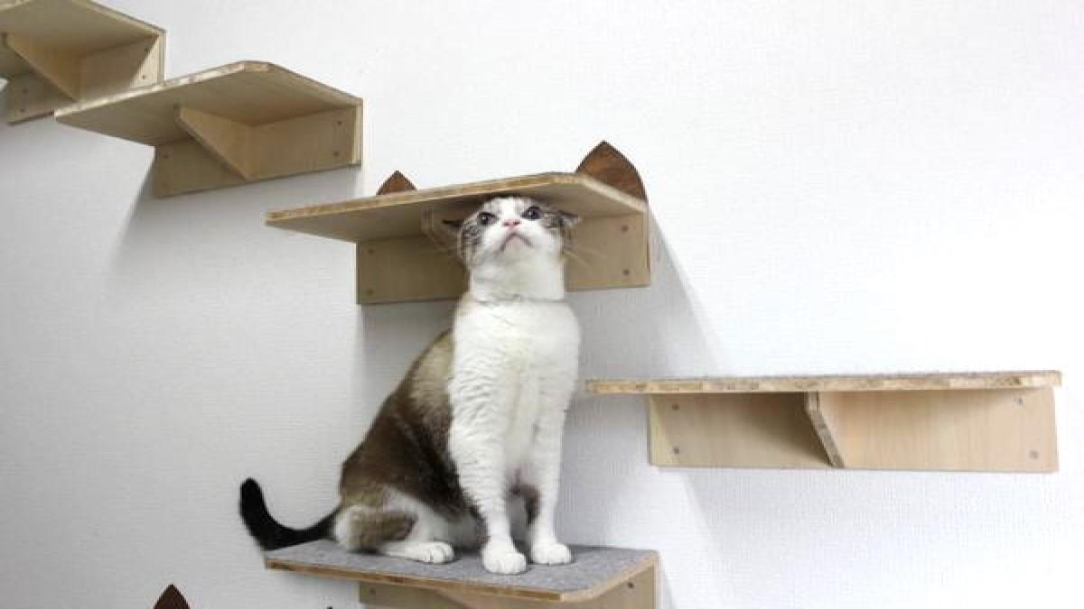 保護猫カフェ ふみふみ
