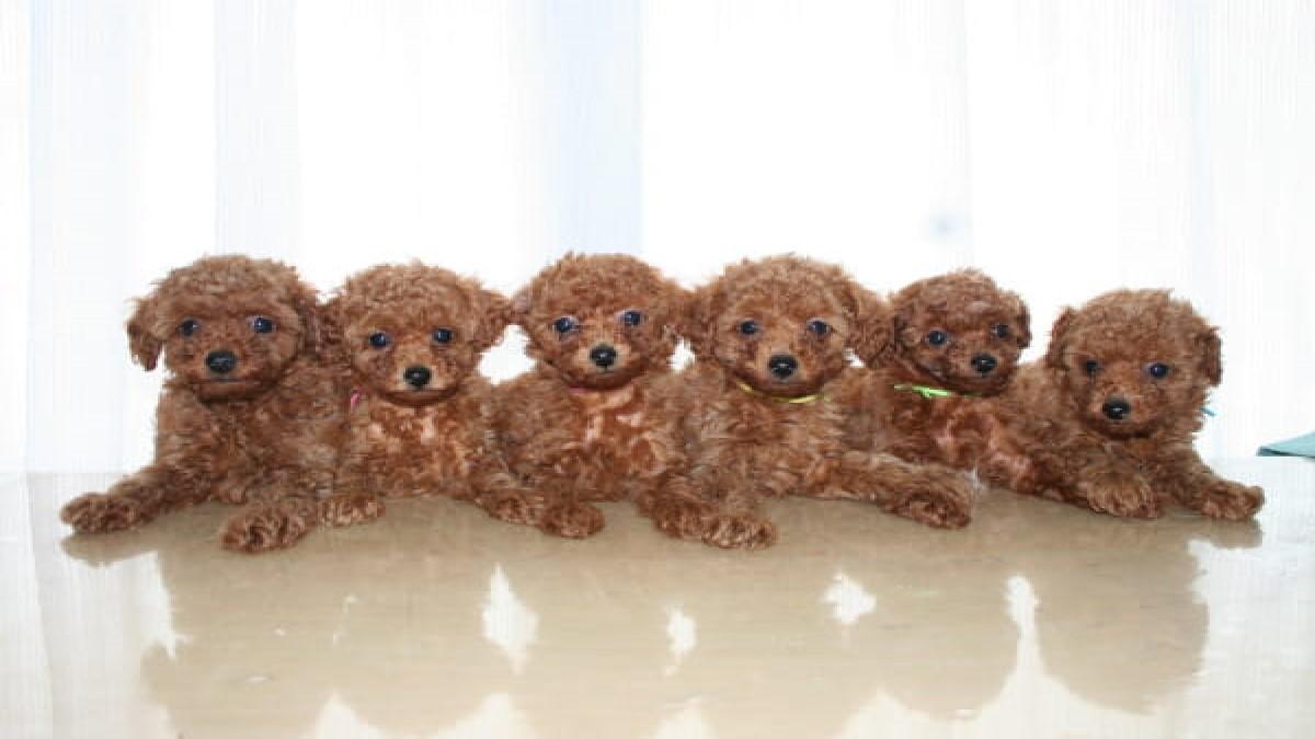 A HAPPY DOG LIFE(ホテル)