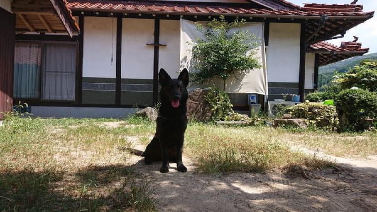ひのか愛犬警察犬訓練所