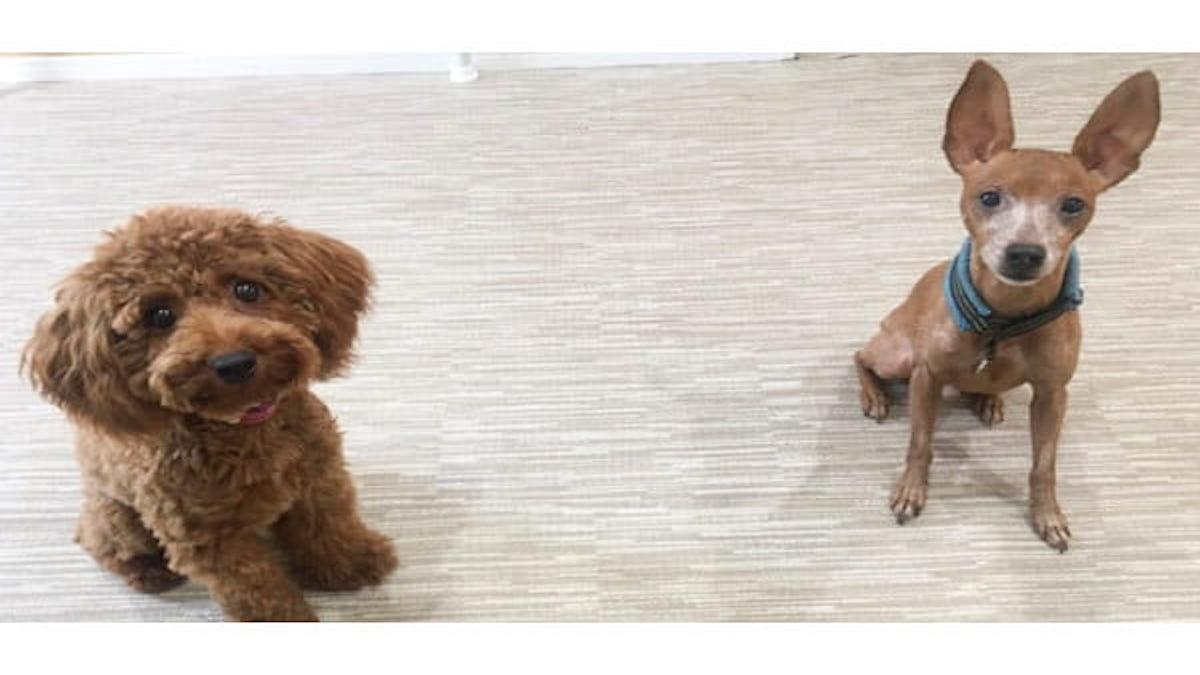 犬の教室 Wan Choice!