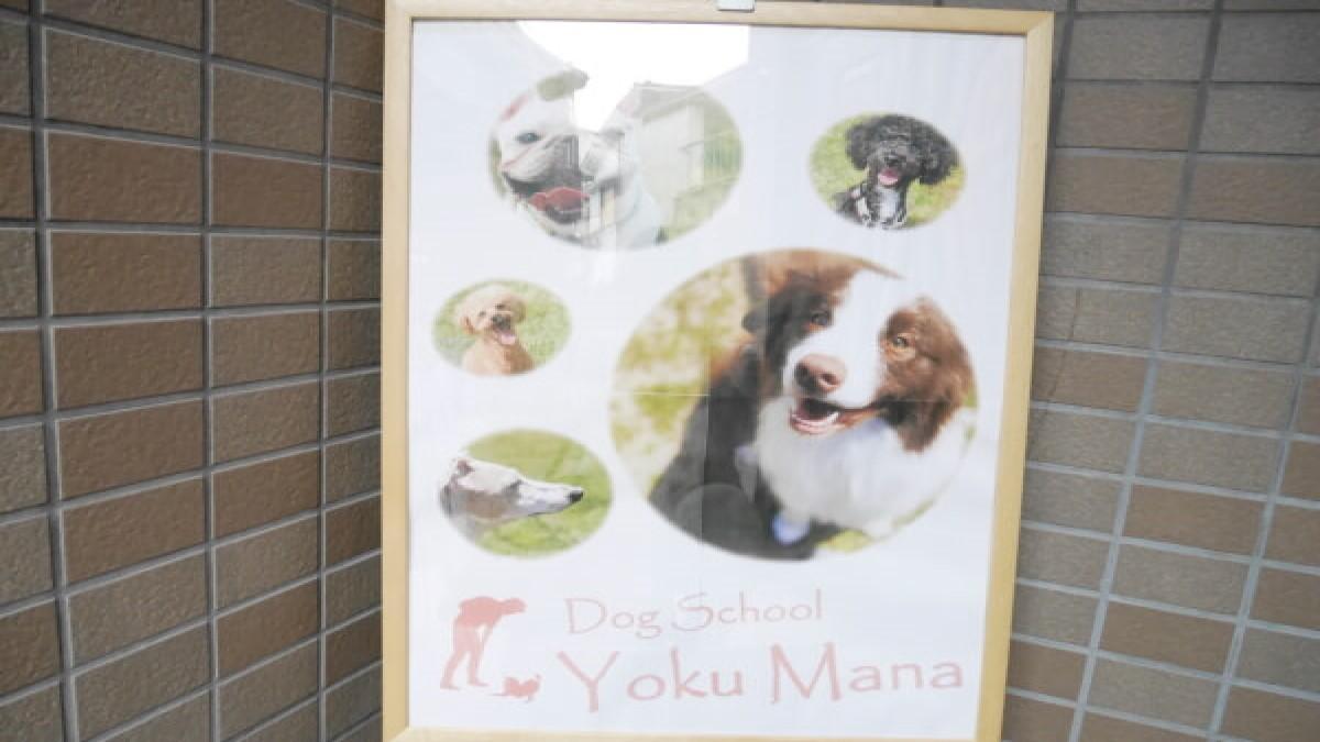 Dog School Yoku Mana