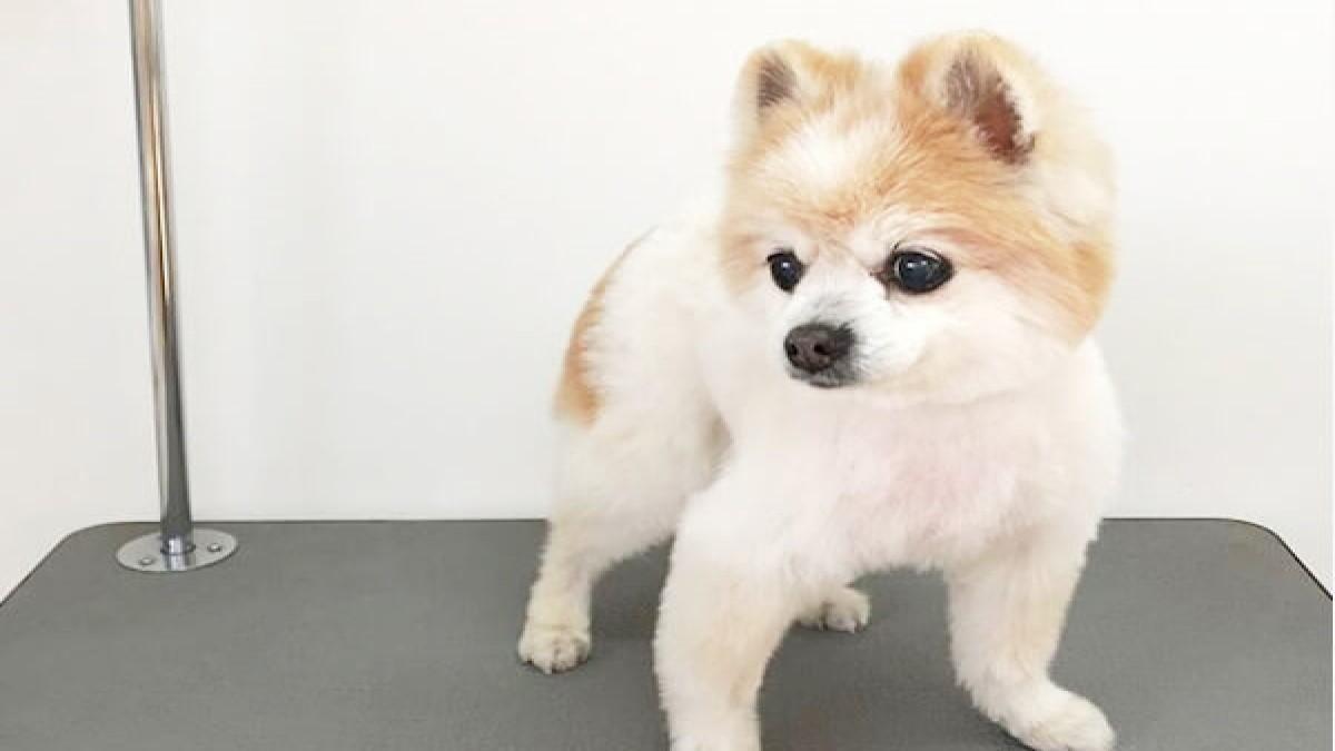 犬の美容室ペーパームーン