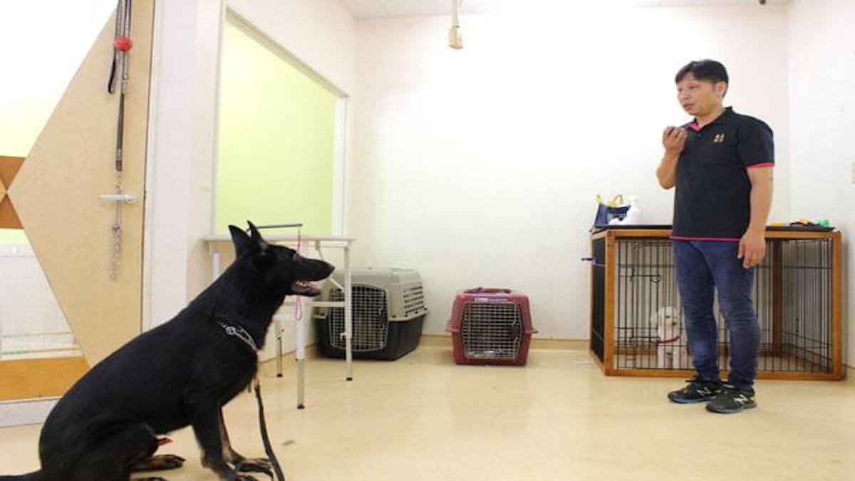 DogSchool UMS(ホテル)