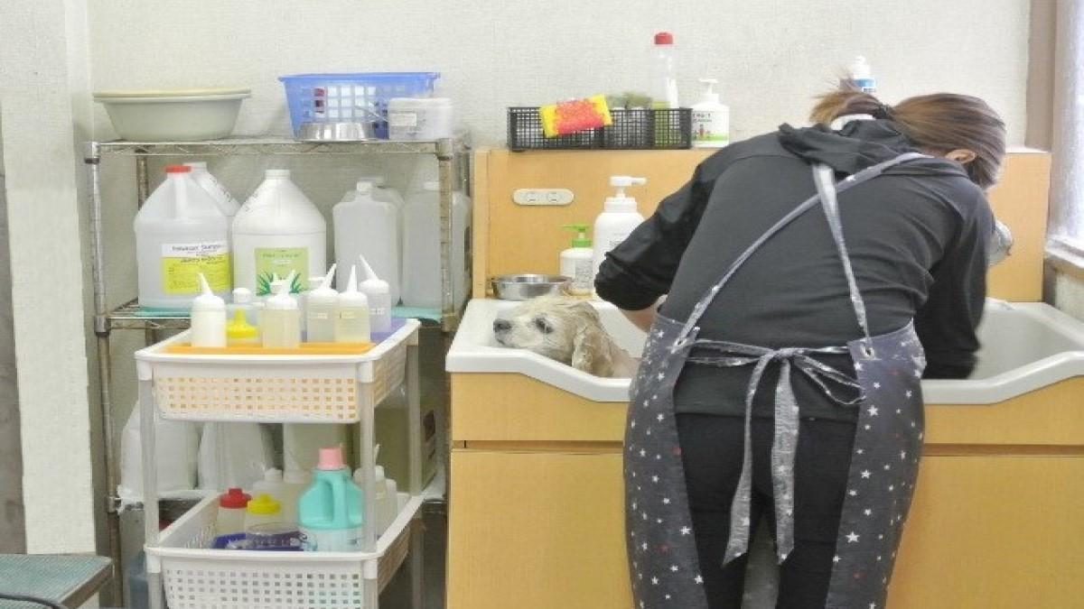 ペットのお風呂やさんWONWON春田店