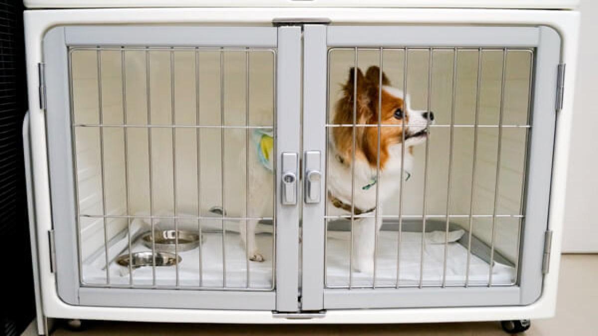 Dog&Cat Space Corone(ホテル)