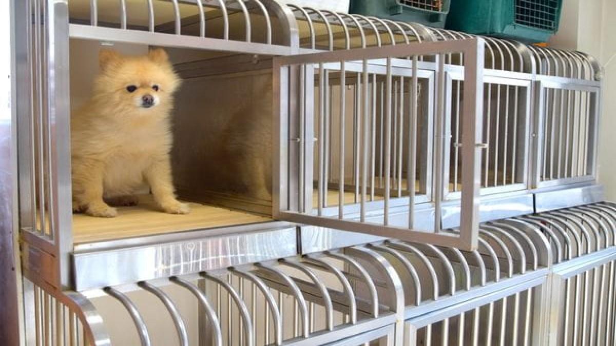 愛犬の美容院&ホテル ペットサロン フレンドハウス(ホテル)