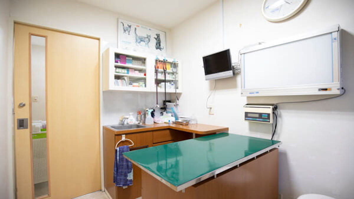 横浜ねこ病院(ホテル)