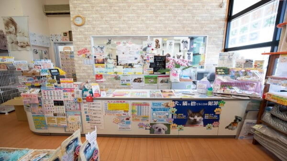 ミリオンペット松崎本店(ホテル)