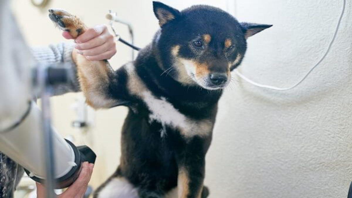 DOG CARE(ペットホテル)