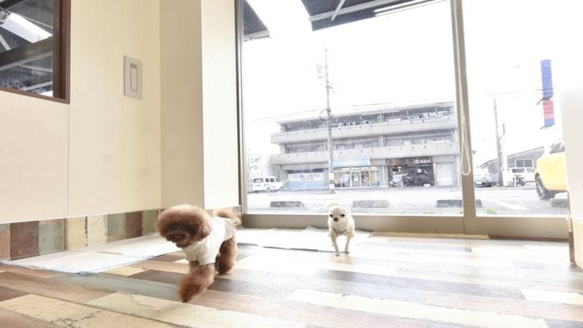 PET DESIGN 春日井店(ホテル)