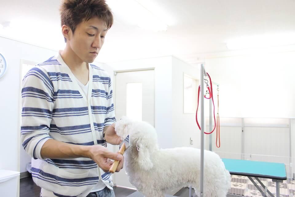 Dog Salon REGISTA