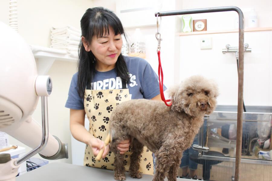 Dog salon La kule'aトリミング中写真