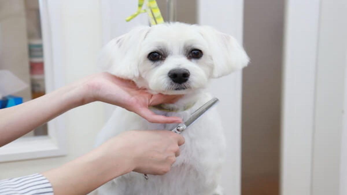 犬のシャンプー屋さん MANU