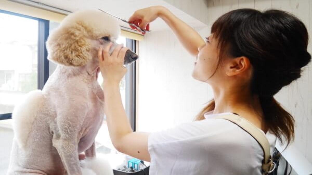 Dog salon R