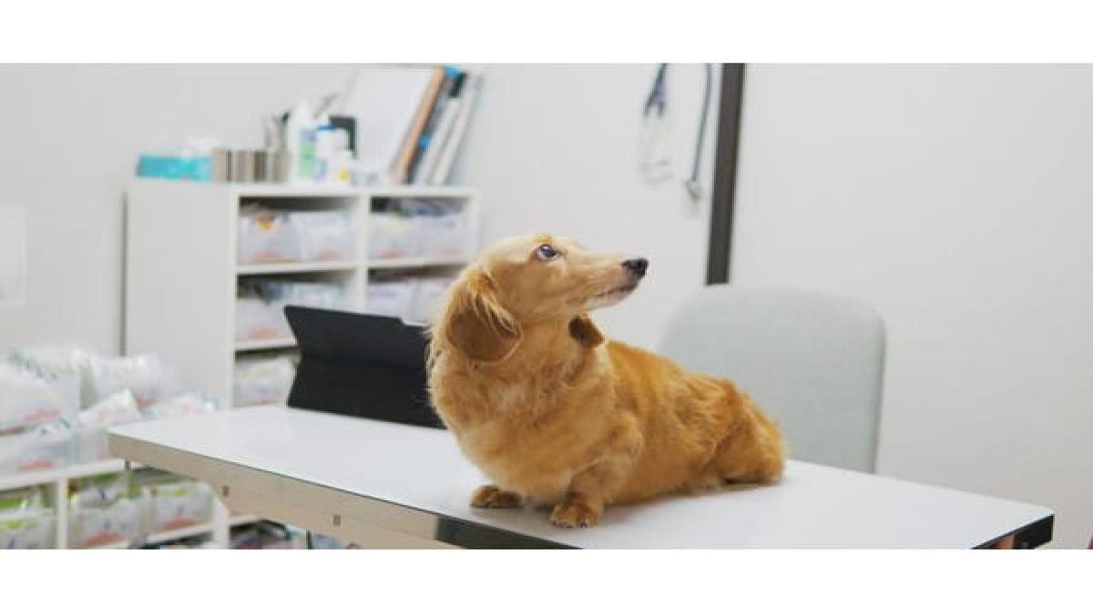 Sho Animal Clinic
