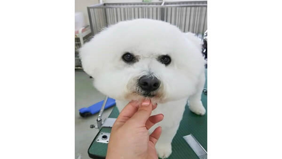 宇都宮愛犬美容学園