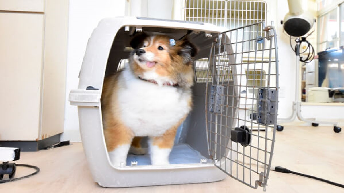 DOG TIME(ホテル)