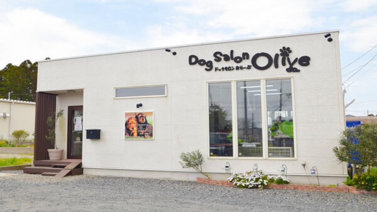 Dog Salon Olive