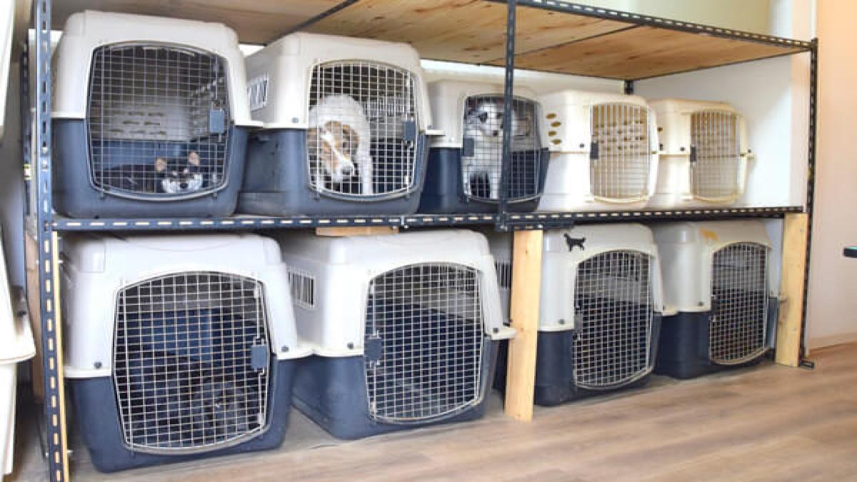 Dog School Spica