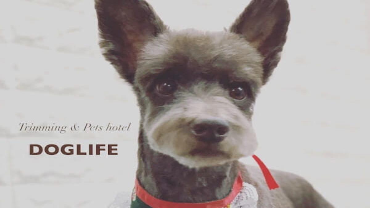 DOG LIFE(ホテル)