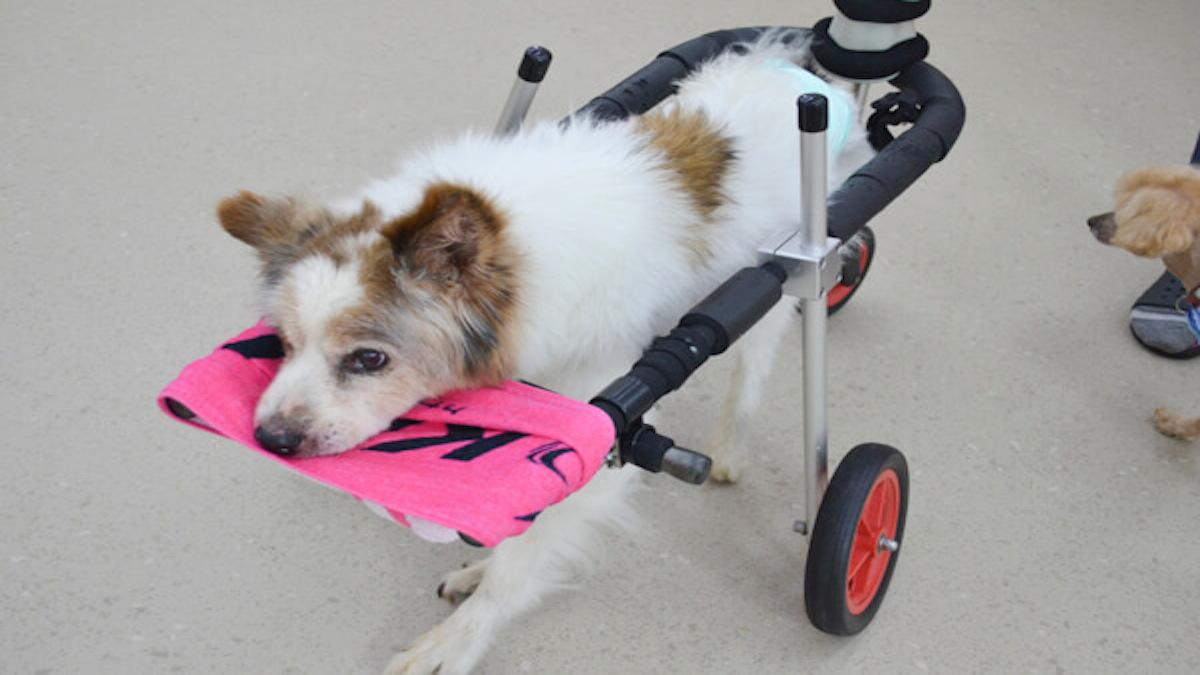 老犬介護ホームメロー