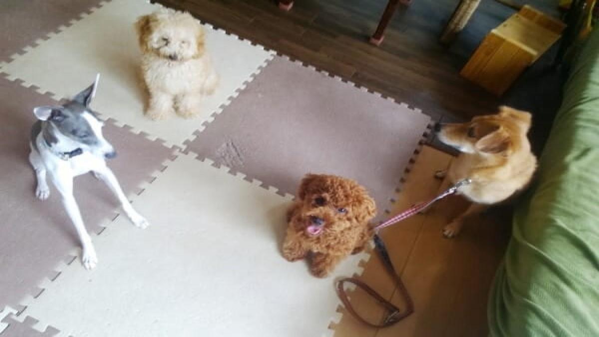 canine educational school Doggy field