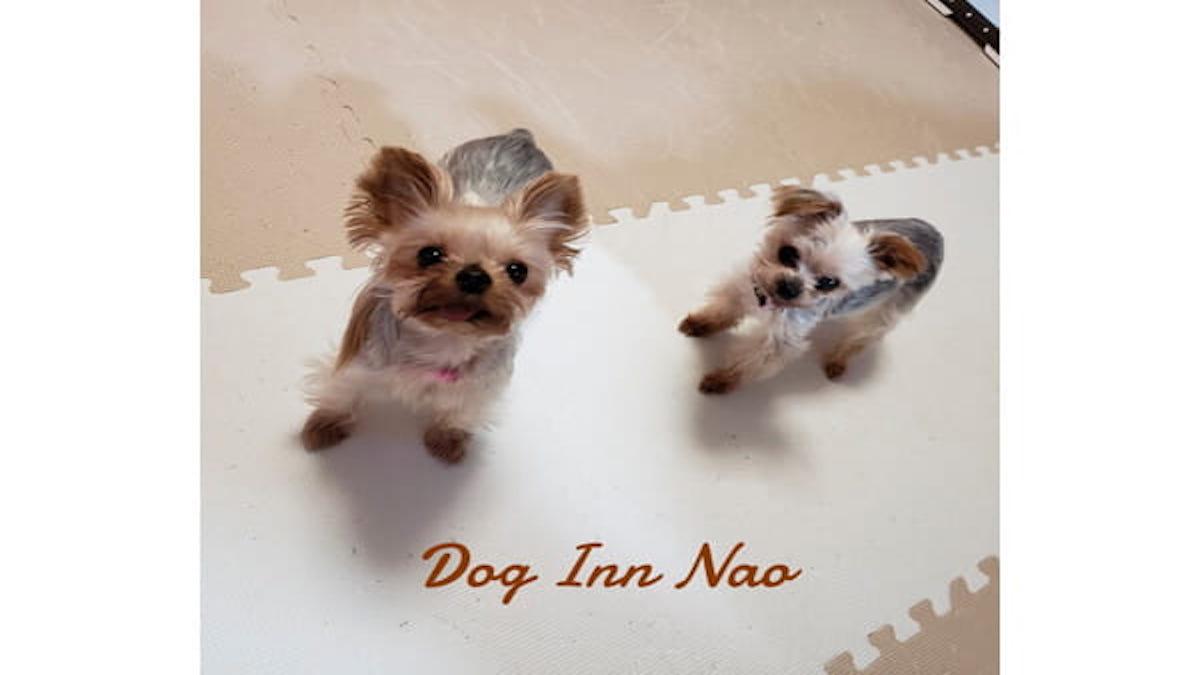 DOG INN NAO