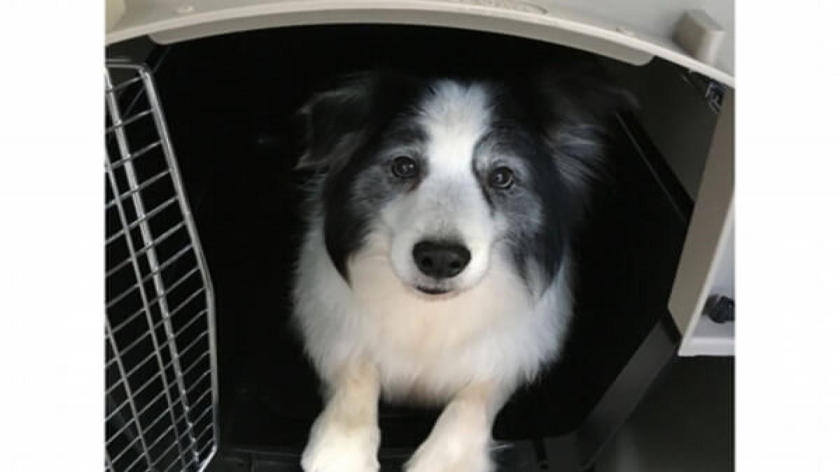 Dog Life Adviser ISHIKAWA (ホテル)