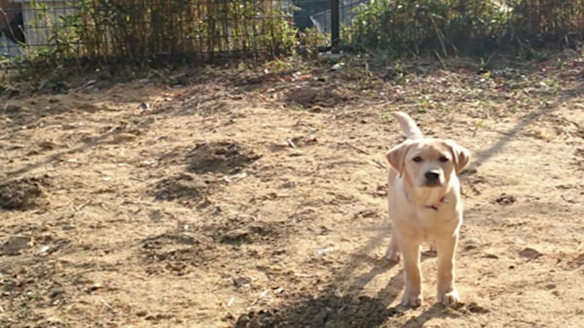 Partner Dog Training きづな