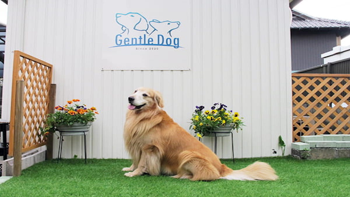 Gentle Dog