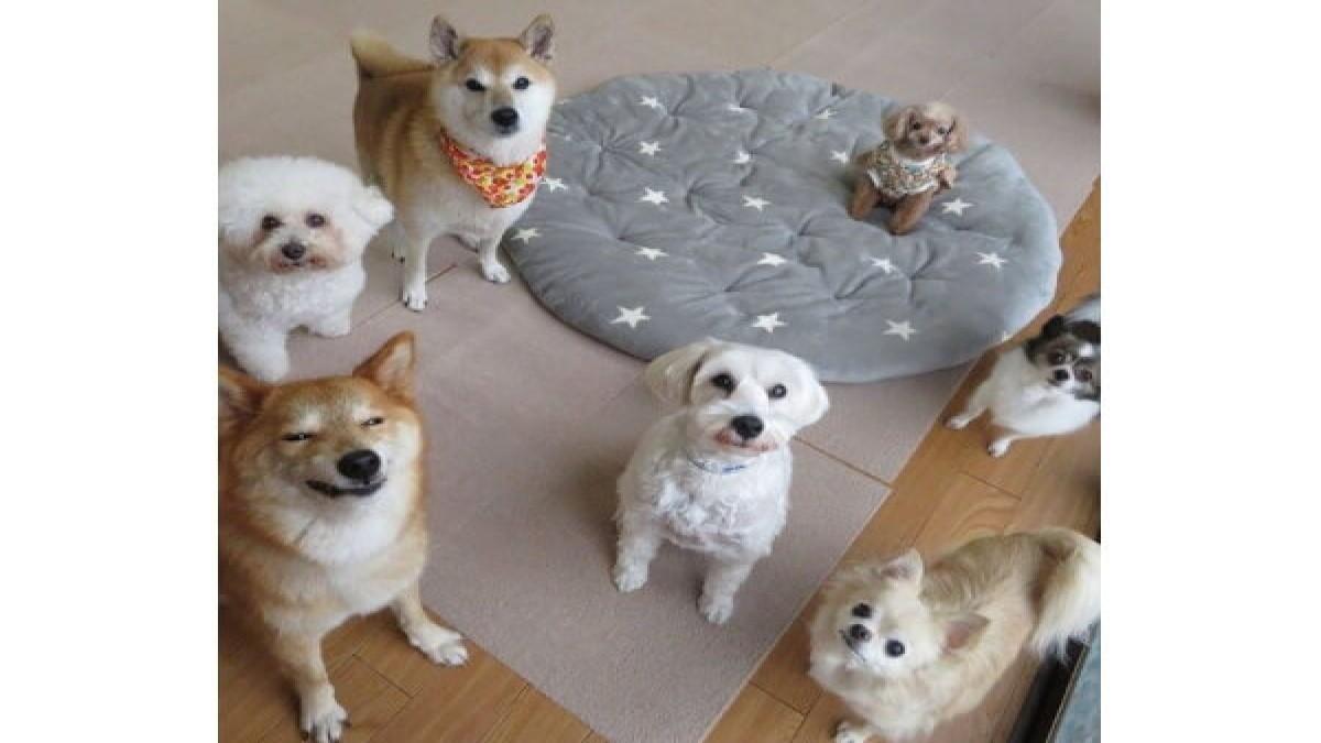 Doghotel NOA