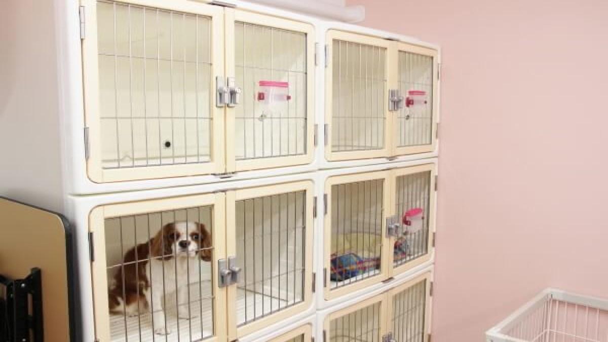 Dog Salon Liebe