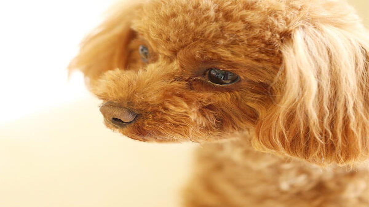 子犬のワルツ