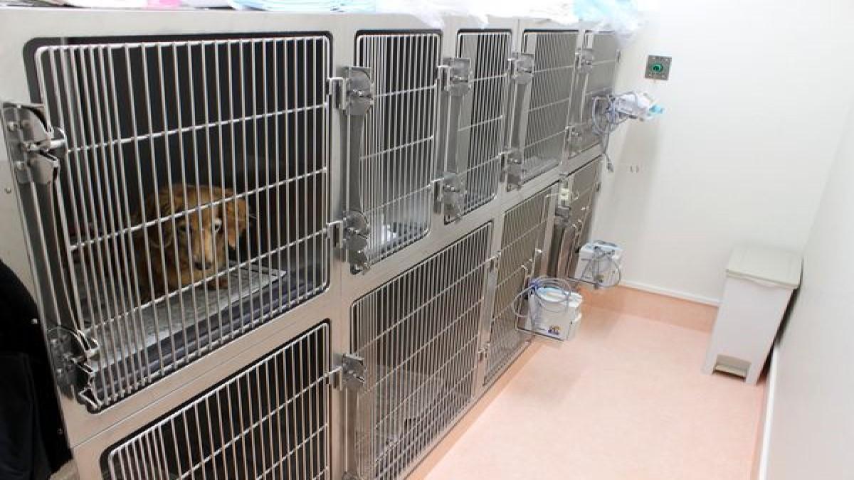 ふじむら犬と猫の病院(ホテル)