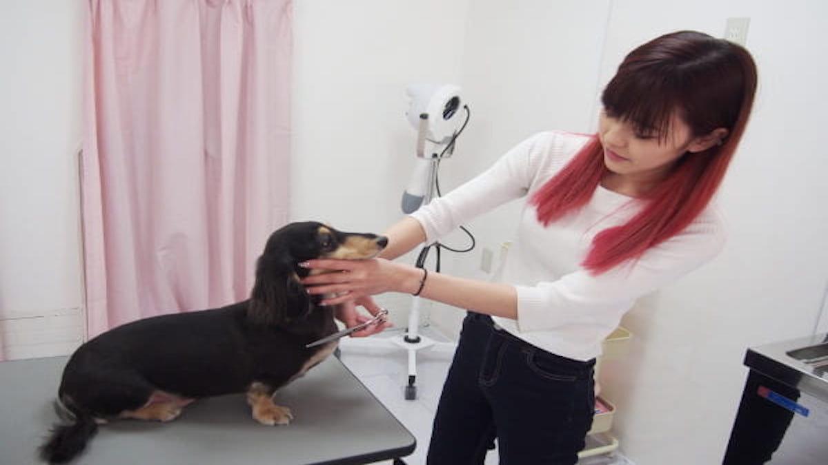 Dog salon Merci
