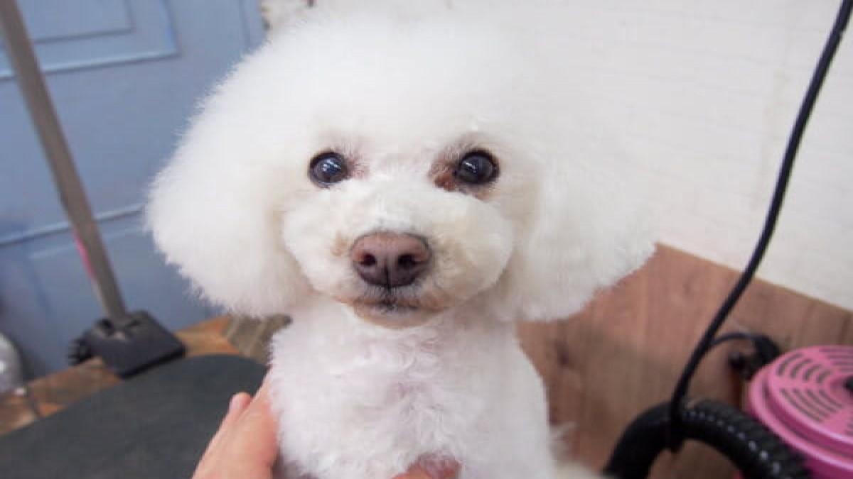 Dog salon Hughug 帝塚山店(ホテル)