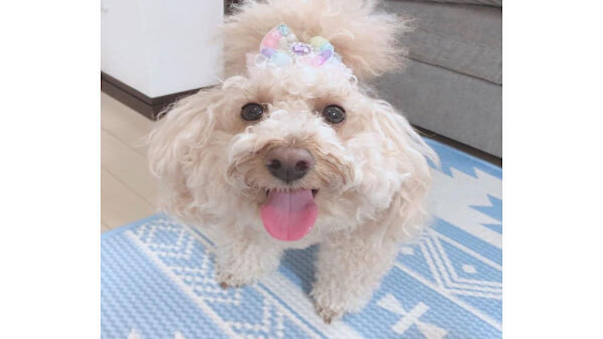 ペットホテル&サロンinfinity dog's